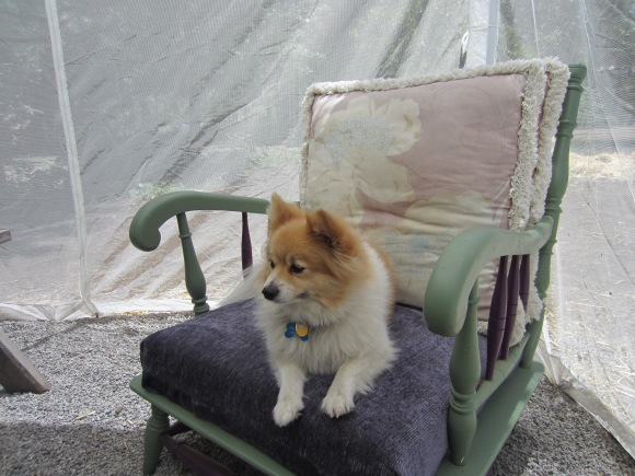 Simon and I share a similar view of camping. Pretty, cushy chair in netted room required.